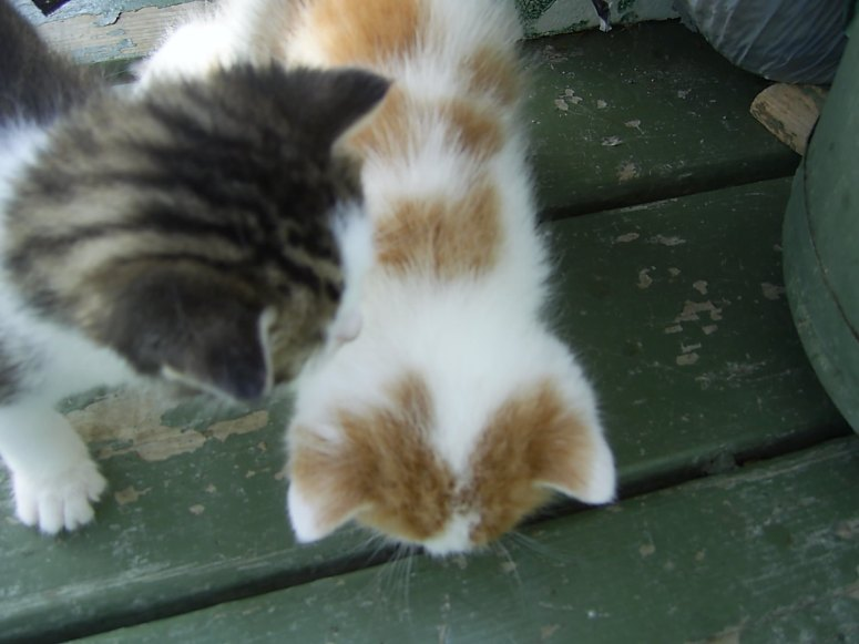 Allez une p'tite dernière dans la série chatons