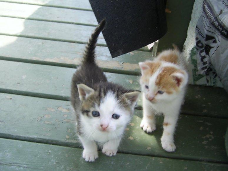 Petits chatons tout neufs